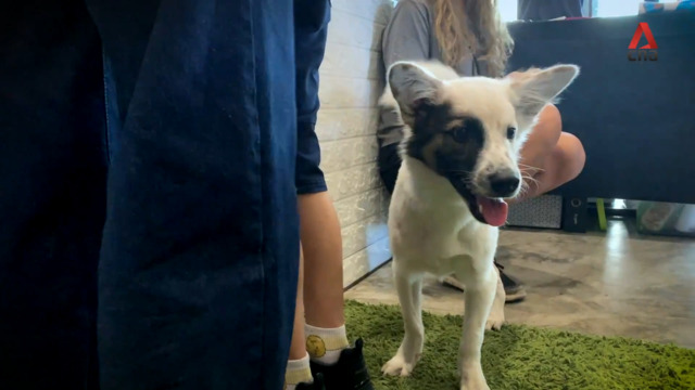 A Bangkok puppy cafe that helps rescue dogs find their forever home | Video