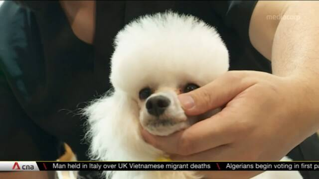 Pet groomers see increased demand for services | Video