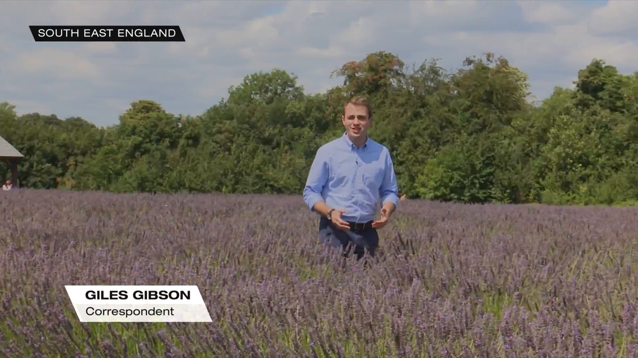 Heatwave, dry conditions both good and bad for UK farmers   Video