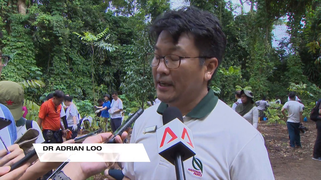NParks unveils action plan to make rainforests more resilient | Video