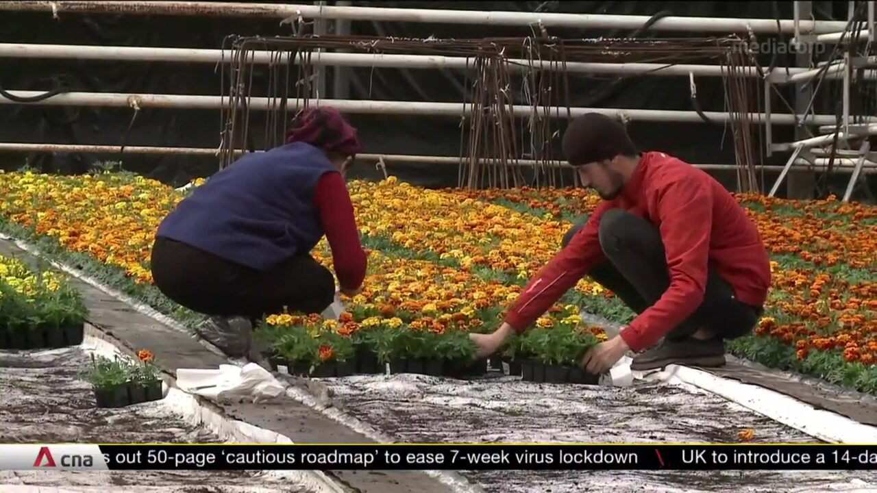 COVID-19: Russian flower industry badly hit by stay-at-home orders | Video