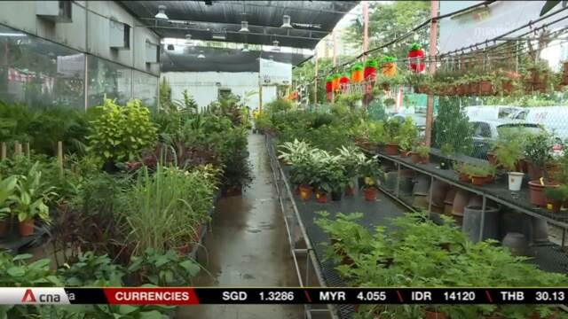 Florists and nurseries hit hard by wettest January in 30 years | Video