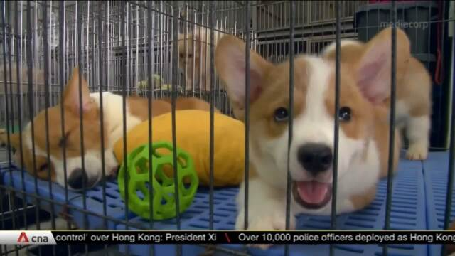 Public feedback wanted over new licensing conditions for dog breeders and pet boarders | Video