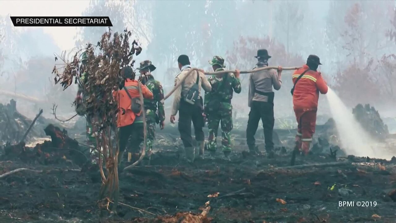 Indonesia's peatland restoration keeps forest fires in check | Video